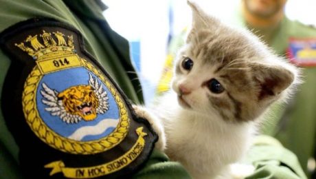 Kitten rescued after 300 mile journey