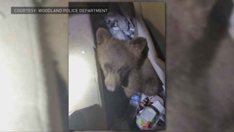 Bear cub in Colorado car
