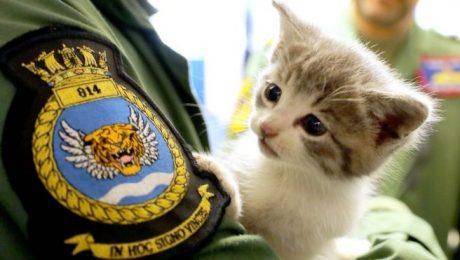 Kitten rescued after 300 mile journey