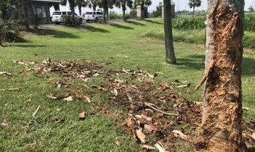 crash in Guste Island Road, near Madisonville, Louisiana